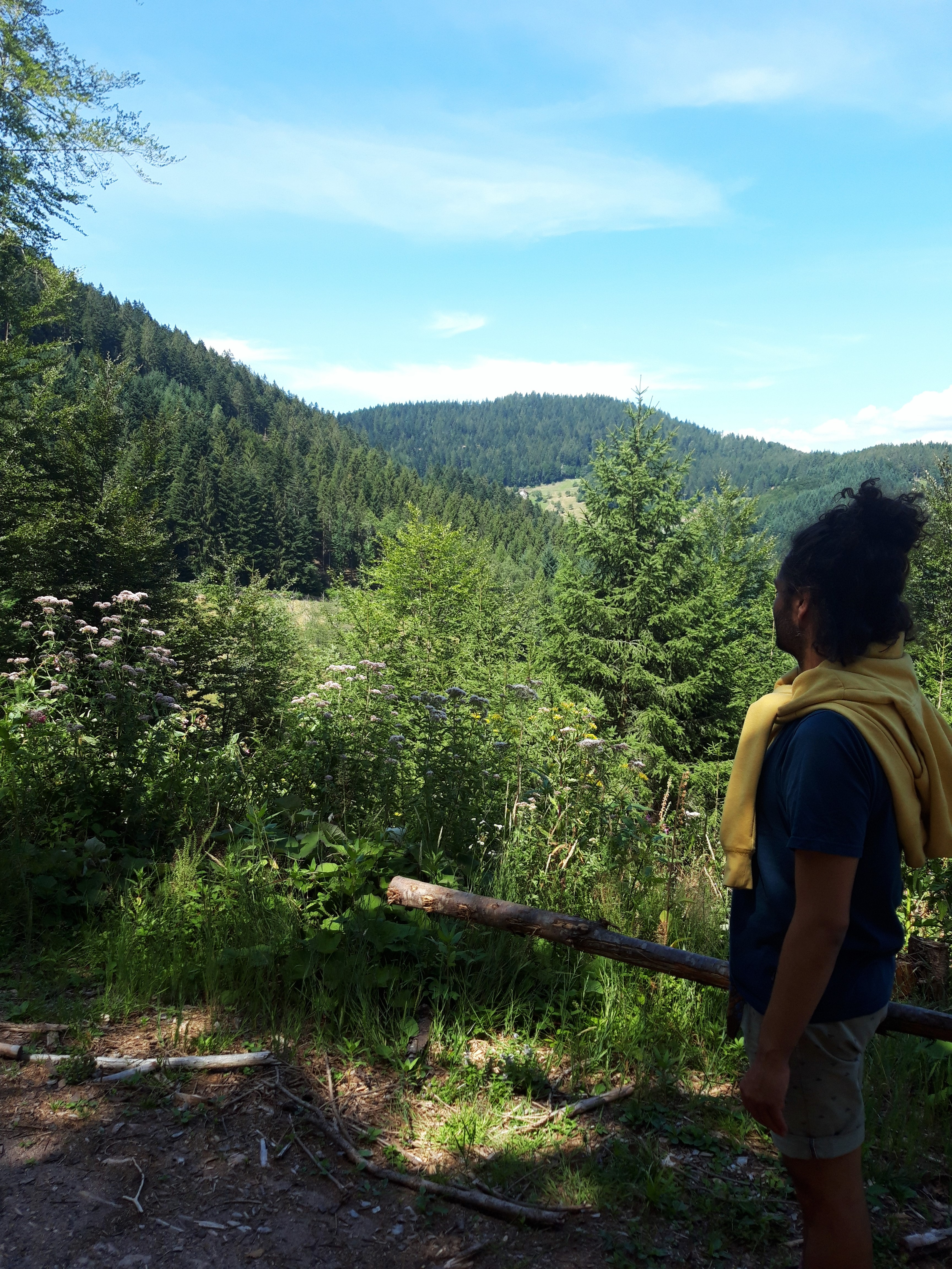 Naturerlebnisse: der Schwarzwaldsteig