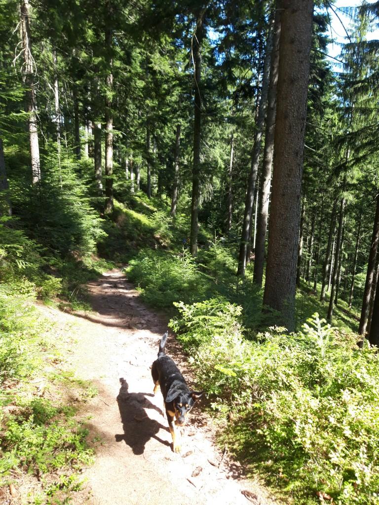 Schwarzwaldsteig 4