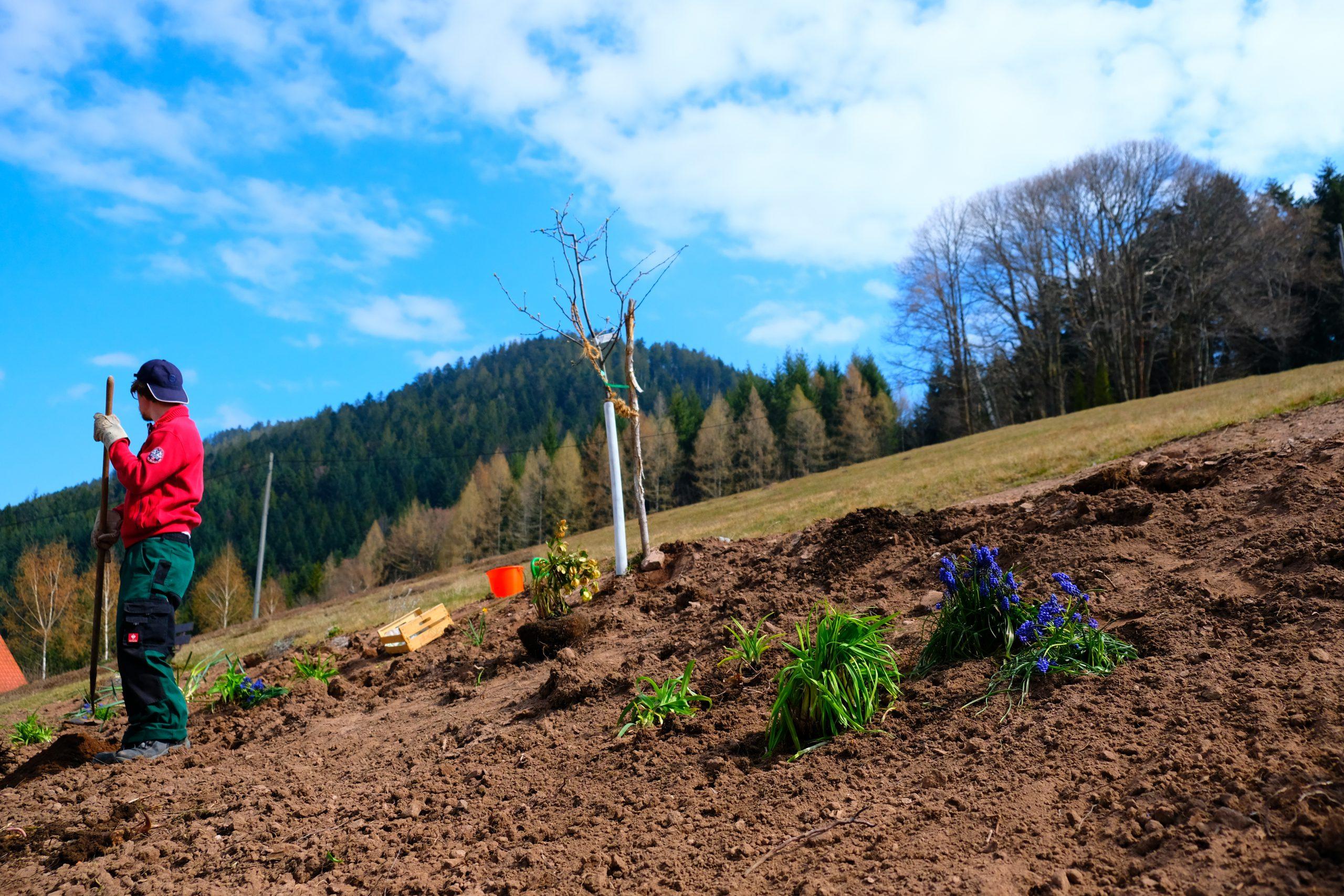 Neuigkeiten vom Gartenprojekt